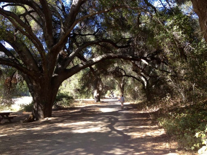 Shaded by Oak Trees