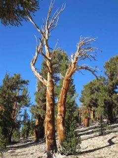 Striking Trees