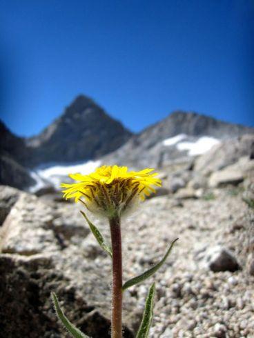 Wildflowers at 13,000 feet