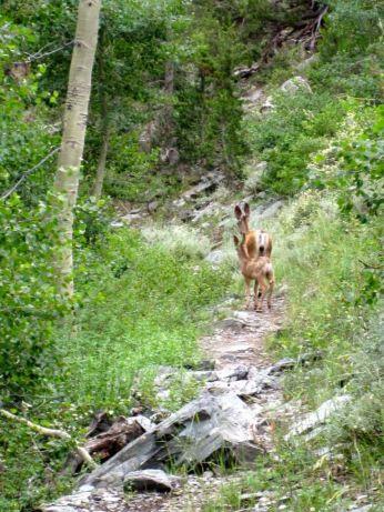 Deer on the JMT