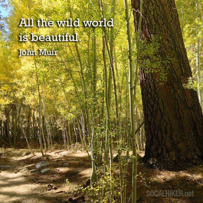 Muir-Monday-All-the-wild-world-is-beautiful-(square)