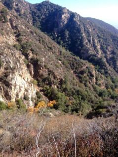A glimpse of fall color in Castle Canyon, from the Sam Merrill Trail above