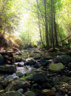 A serene scene in Eaton Canyon