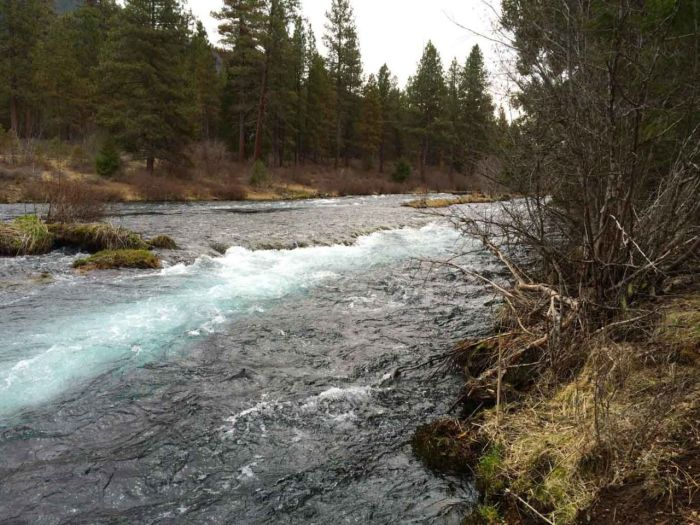 Blue water of the Metolius River