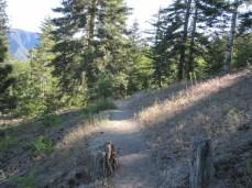 Angelus Oaks trail