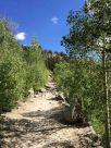 Through an Aspen Grove