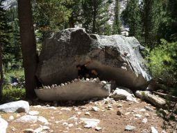 The JMT Whale in LeConte Canyon