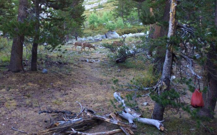 Deer at Little Pete Meadow