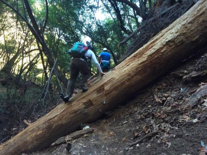 Chantry Flats-Fell Tree on the Mt Zion Trail -14