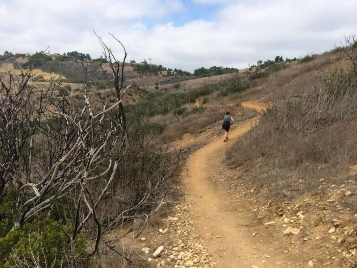 Paintbrush Trail