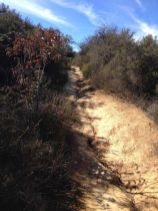 Trail to Skull Rock
