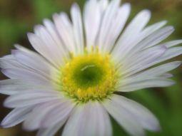 Wildflower Macro 2