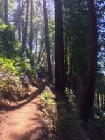 Redwood Giants Shade the Trail