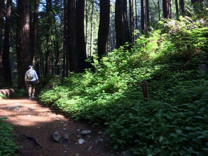Verdant Green on the Limekiln Falls Trail