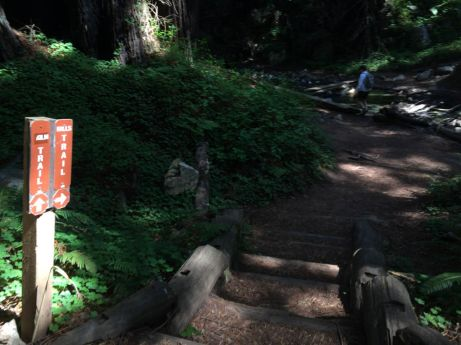 Junction to the Limekiln Falls