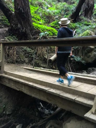 One of the many bridges in Muir Woods