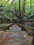 Wood bridge over Timms Creek