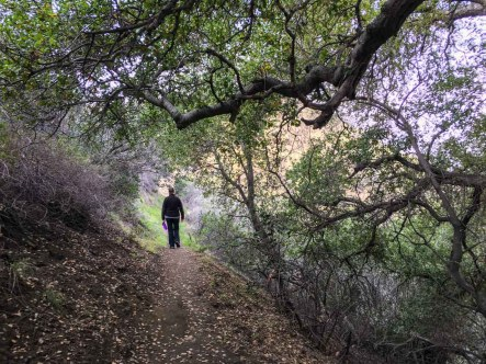 Oak trees on La Tuna Canyon trail