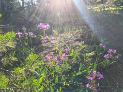 Wildflowers on the Black Crater Trail