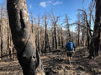 The burn scarred area from the 2015 Lake Fire are eerie.