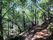 Easy hiking on the Matt Davis Trail