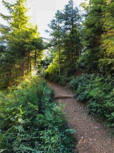 Shady lower trail up Mt Ellinor