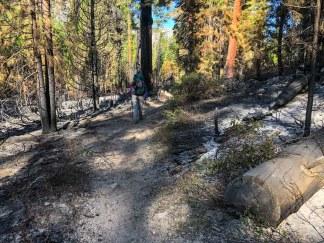 Day 3 - Bubbs Creek trail fire zone