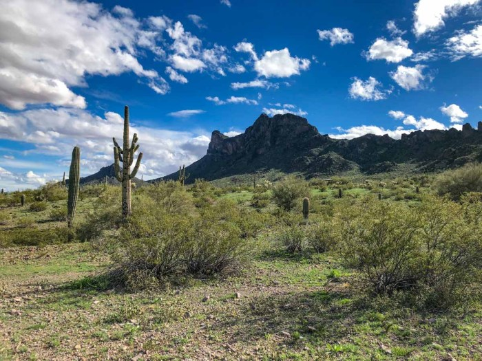 Picacho Peak from my camp site