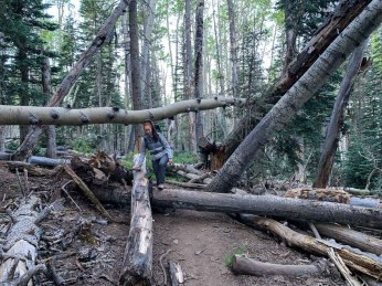 Downed Trees on the Humphreys Peak Trail