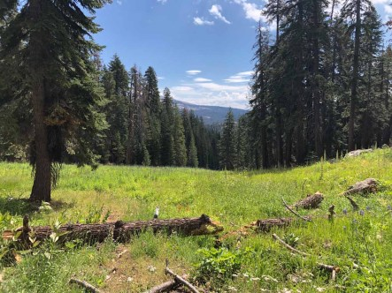 Meadow leading to Buck Camp