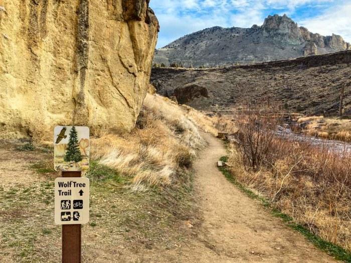 Wolf Tree Trail