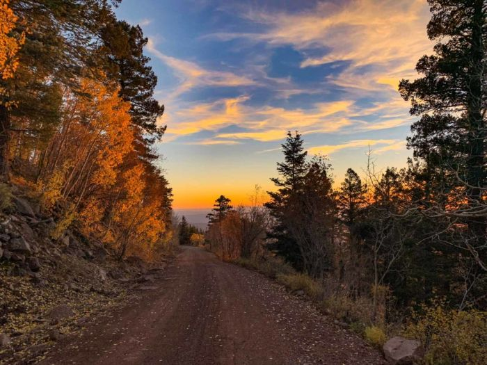Dirt road to the summit of Bill Williams Mountain