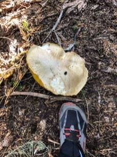 Mushroom - Day 2