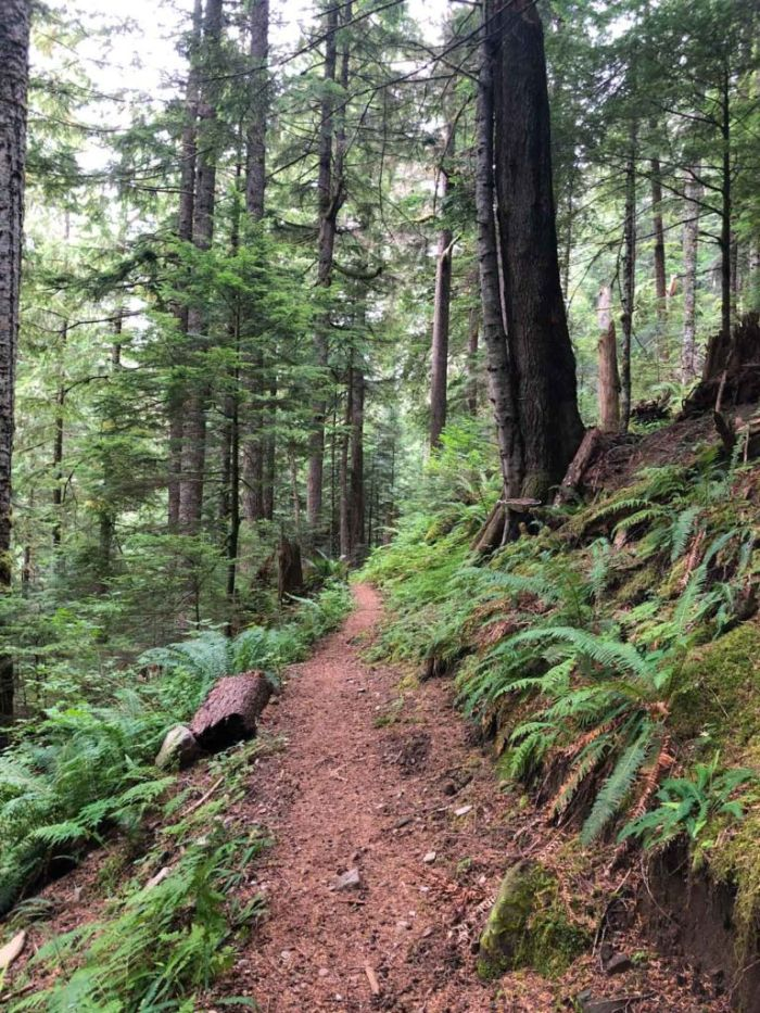 Trail to South Mowich River on the Wonderland Trail