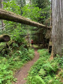 Trail to South Mowich River Camp