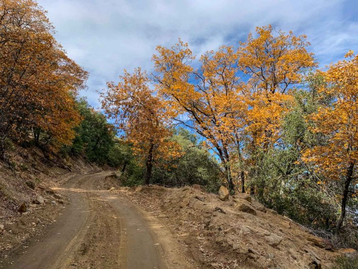 Fall Color on the Palomar Divide Road