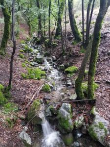 Creek on Mt. Um trail. Jan. 9 2019 mt-Um-creek1