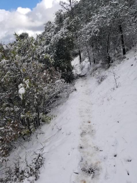 Mitchell-Creek-to-Mt-Diable-Summit-2-10-snowy-trail