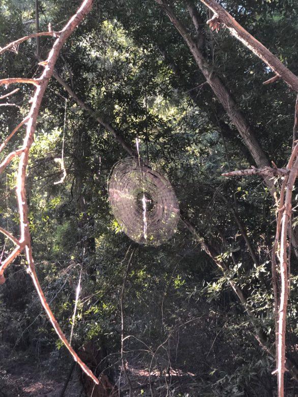 Spider-web-on-Mount-Wilson