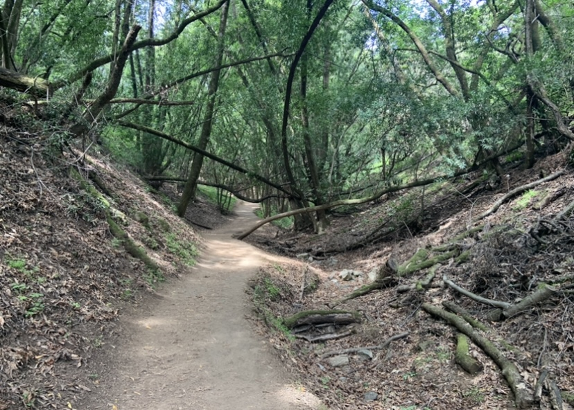 trail-two
