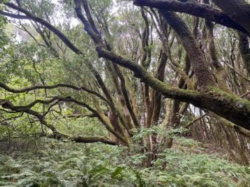 Dipsea-Trail_Path