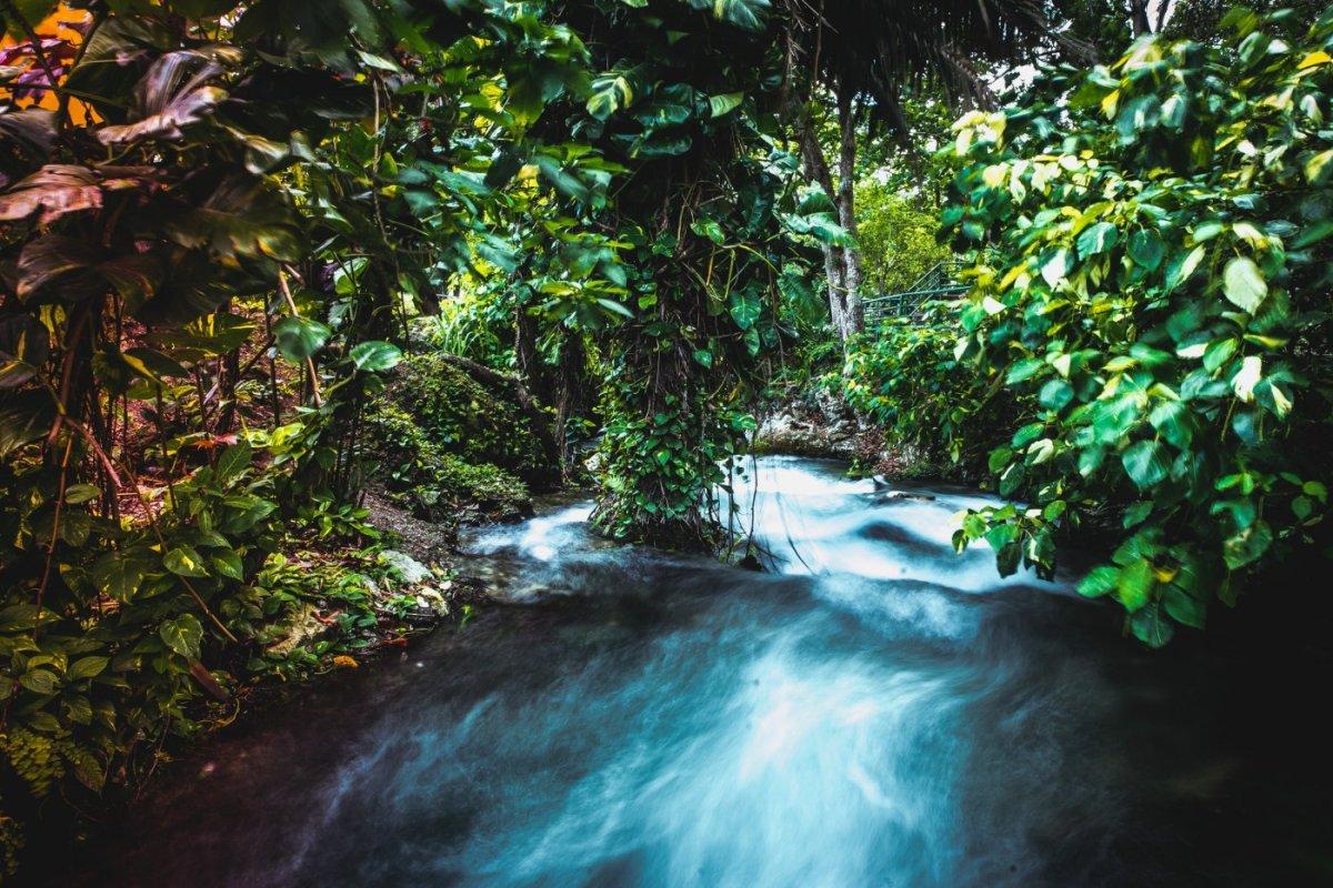 Roaring River Jamaica reistips