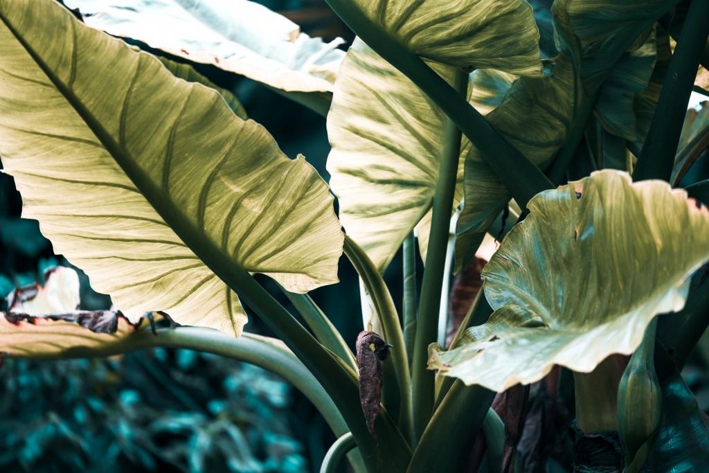 Mauritius planten fauna