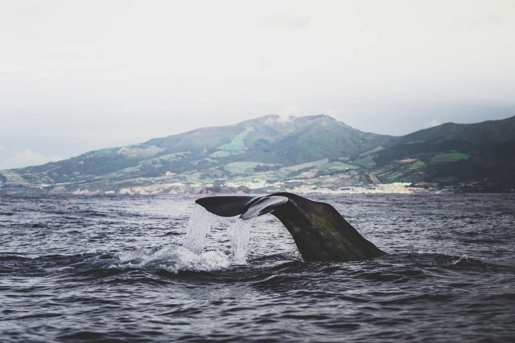 eiland hoppen azoren