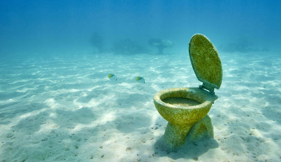Image Result For Where Do They Go To The Bathroom On Survivor