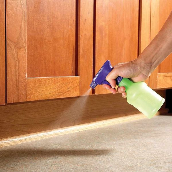 How to Get Rid of Ants | The Family Handyman