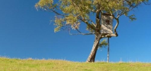 treehouse-645x250