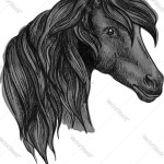 Arabian Horse Head Sketch For Equine Sport Design Vector Image