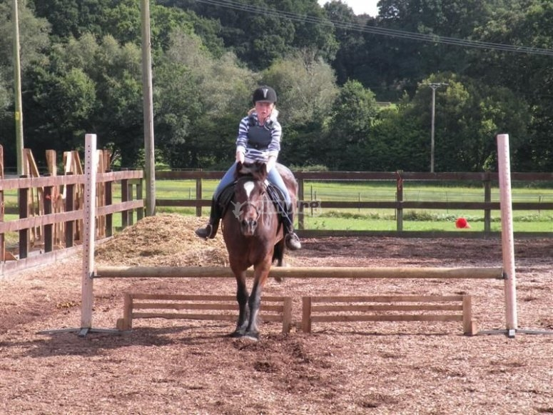 Arniss Equestrian Horse Riding
