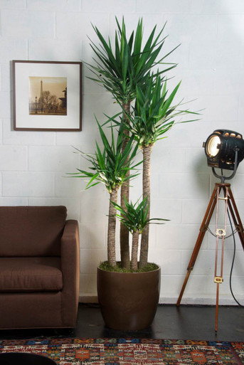 Where Can I Buy Indoor Plants